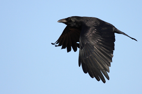 Im The King Of The Castle Symbolism The Crow