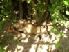 fox cub in the sun 2