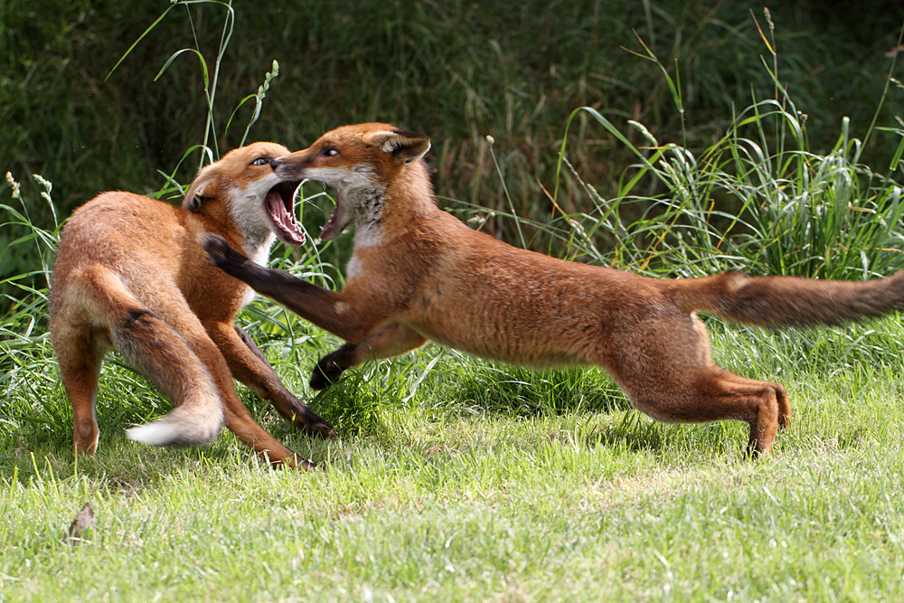 fox_1407114425bwc_