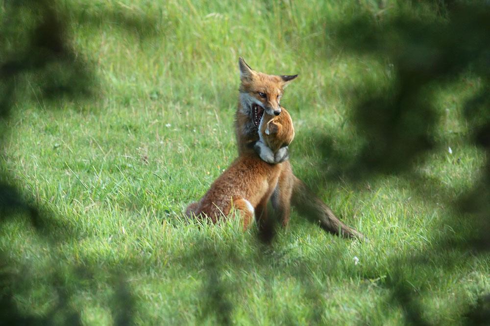 fox_field_1408113048
