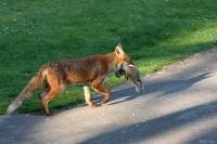 fox_campus_0105090532_a
