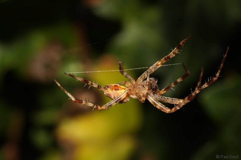 spider_1709085482