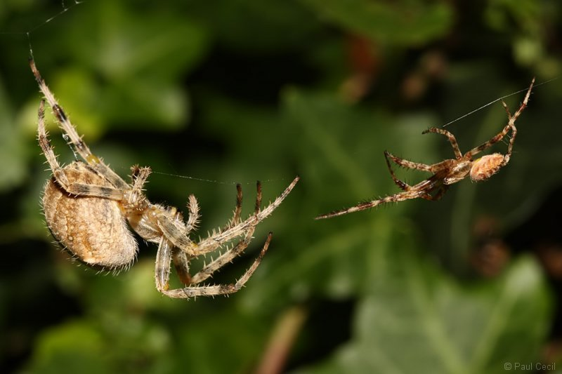 spider_x2_1709085476