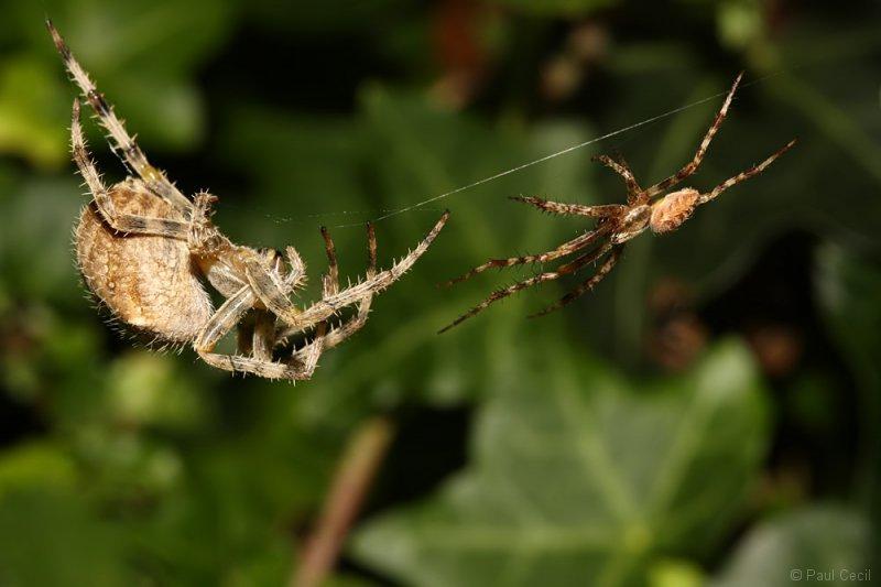 spider_x2_1709085478