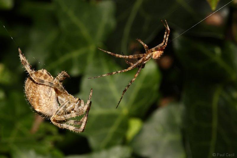 spider_x2_1709085490