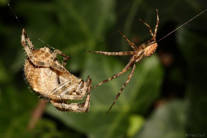 spider_x2_1709085494