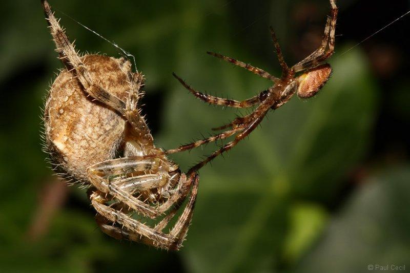 spider_x2_1709085498