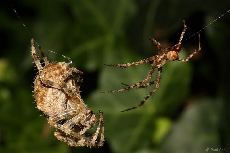 spider_x2_1709085503