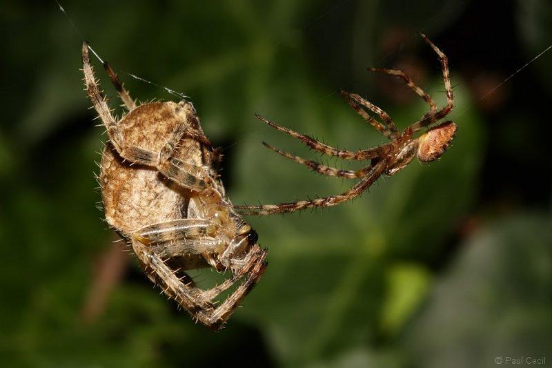 spider_x2_1709085506