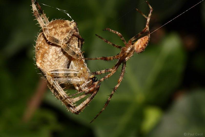 spider_x2_1709085511