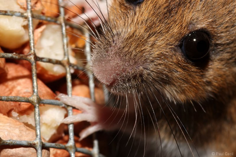 woodmouse_0208096070