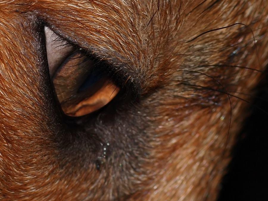 name fox eyes - photo #30