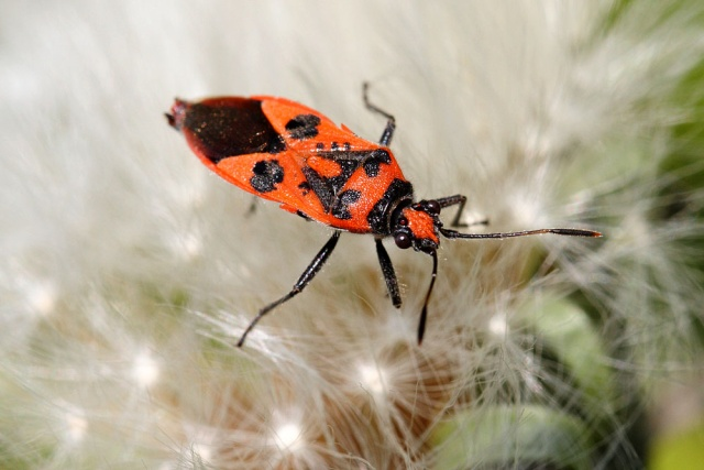 bugs butterflies birds and babies. Black Bedroom Furniture Sets. Home Design Ideas