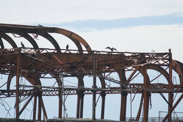 Detail of the ruins of the West Pier at Brighton with roosting cormorants.