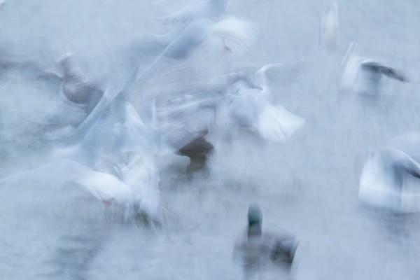Motion blur photo of gulls