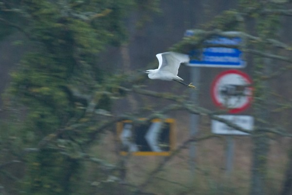 Little egret and traffic signs