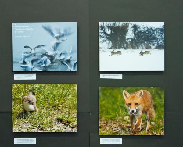 'Celebrating Falmer Wildlife