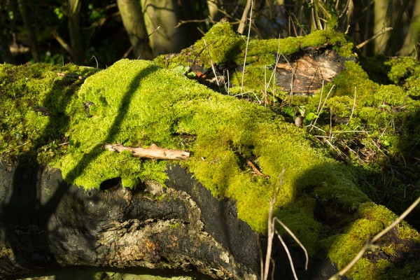Fallen trees in woodland