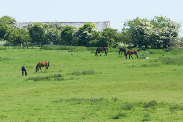 Horse in field at Falmer