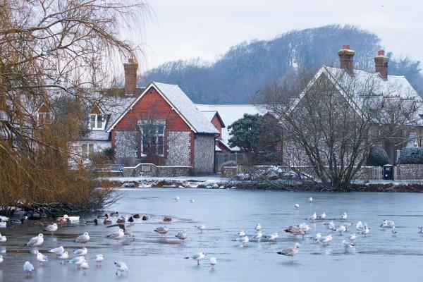 Falmer Pond, frozen