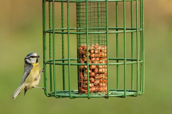 Blue tit at Woods Mill