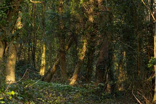 Woodland path at Falmer