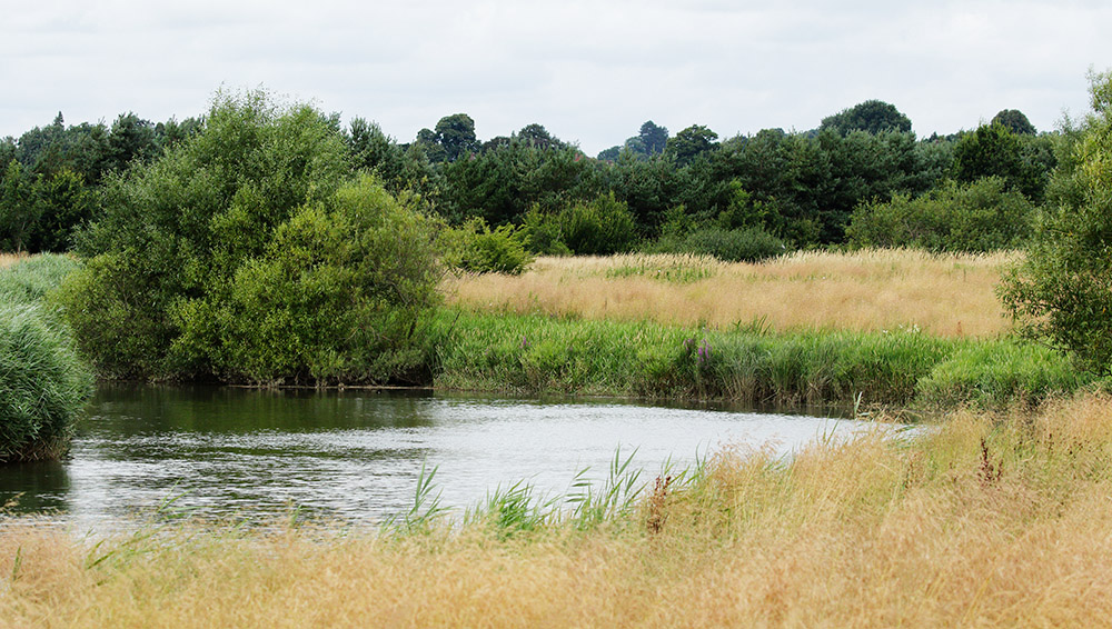 Pulborough Brooks, South Downs National Park