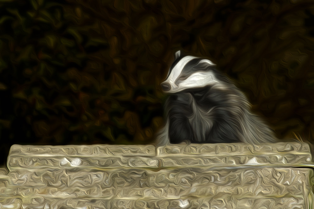 Badger through a fine art filter