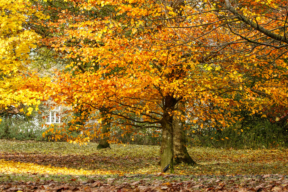 Autumn colours at Falmer Village, East Sussex