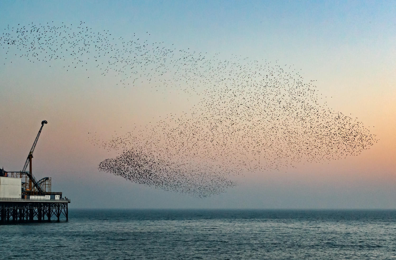 murmuration of starlings at Brighton