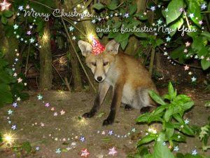 Festive Foxes